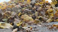 Stock Video Footage of Pile of Leaves (Handheld) HD