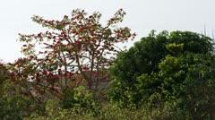Ein Gedi trees Stock Footage