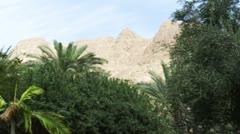 an oasis kibbutz in the desert - stock footage
