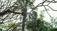 Oasis trees at Ein Gedi Stock Footage