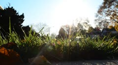 Sun Shinning Though Grass with Flare HD Stock Footage