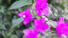 Purple Flower Stock Footage
