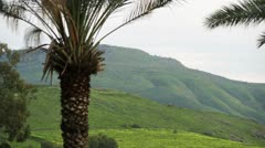 A palm tree and green hills Stock Footage