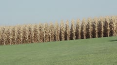Stock Video Footage of Stock Footage - Field of Dreams - Famous Corn Field - Baseball  - Iowa