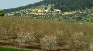 Panorama of an almond orchard Stock Footage
