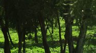 Panorama of a forest Stock Footage