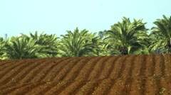 panorama of furrows and palm trees - stock footage