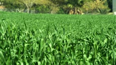 A green field Stock Footage