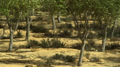 An orchard oasis Stock Footage