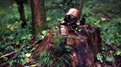 Tree Stub And Bark - stock footage