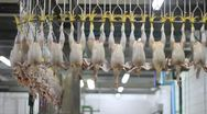 Stock Video Footage of Food industry, chicken meat