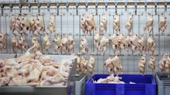 Food industry, chicken meat Stock Footage