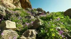 A rocky, flowered hillside in Israel. Stock Footage