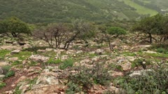 Goats and their herder on a rocky slope in Israel. Stock Footage