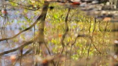 Fall Trees - Reflection in Puddle (Rack) Stock Footage