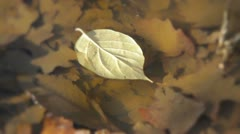 Fall Leaf Floating in Puddle Stock Footage