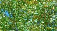 Leaves green on wind Stock Footage