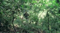 Walking in the Mexican Jungle Stock Footage