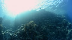 Coral reef shallow water sun and ocean surface Stock Footage