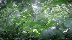 Rain Forest or Jungle Stock Footage
