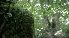 Xilitla Jungle Stock Footage