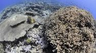 Stock Video Footage of 110612c 045 tropical coral reef shallow water