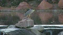 Strange Bird-Photo-JPEG for POND5 - stock footage