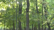 Amazing forest Stock Footage