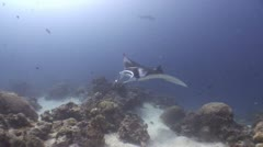 Big Glant Manta swimming crosses the reef (Part 4) Stock Footage