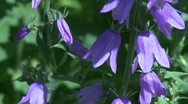 Purple flowers (2 of 2) Stock Footage