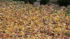 leaf blower - stock footage