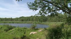 Secluded river (2 of 4) - stock footage
