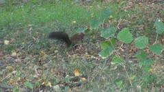 Beautiful squirrel Stock Footage