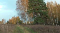Autumn. Stock Footage