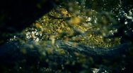 Lush ginkgo tree in breeze,Autumn,forest,woods. Stock Footage