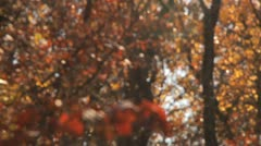 Rack focus to many falling leaves Stock Footage