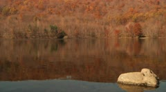 Rock in reflective lake with autumn background - stock footage