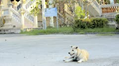 Stray Dog Resting at a Temple Stock Footage