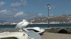 Pelican in Mykonos, Greece Stock Footage