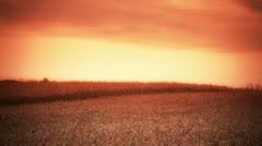 Cornfield at Sunset - Harvest Stock Footage