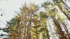 Pine tree tops pan Stock Footage