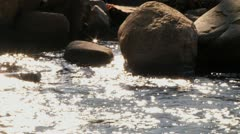 Glistening sun on babbling brook Stock Footage