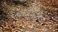 Stock Video Footage of The falling leaves