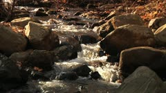 Stream tilt to autumn trees Stock Footage