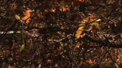 Slow Motion leaves falling between branches Stock Footage