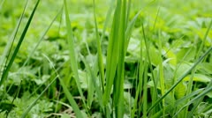 grass - stock footage