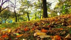 Tracking shot autumn Stock Footage