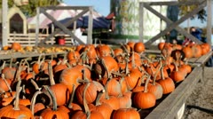 Assortment of pumpkins on the back of cart - stock footage