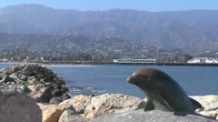 A dolphin sculpture graces the entrance to Santa Barbara harbor. Stock Footage