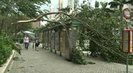 Stock Video Footage of Fallen Trees During Tropical Storm